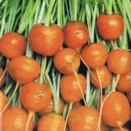 "Морковь сорт ""ПАРИЖСКИЙ РЫНОК"" (Parijse Markt)  5 гр"