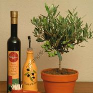 Олива европейская   (Olea europaea)   10 семян