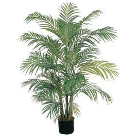 """Пальма  сорт """"АРЕКА""""  (Areca palm)   10 семян"""