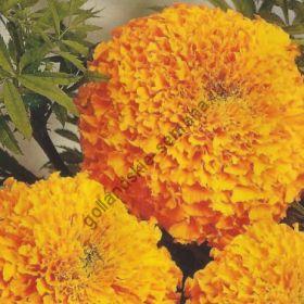 "Бархатцы  сорт ""ГАВАЙИ""  (Hawaii)  150 семян"