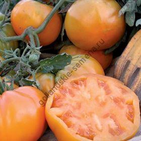 """Томат сорт""""АПЕЛЬСИНОВЫЙ КОРОЛЬ БИО""""(Orange King BIO) 20 семян"""