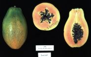 "Папайя  сорт ""ЗАКАТ"" (papaya Sunset)   10 семян"